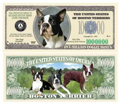 Dog_Boston_Terrier
